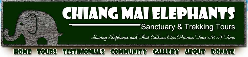 Chiang Mai Elephants Tours Header