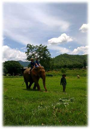 Safe, non torture elephant rides in Chiang Mai Thailand